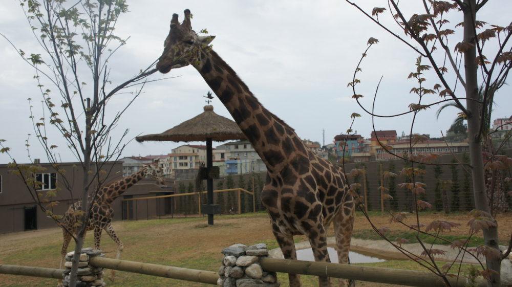 Darıca Faruk Yalçın Hayvanat Bahçesi
