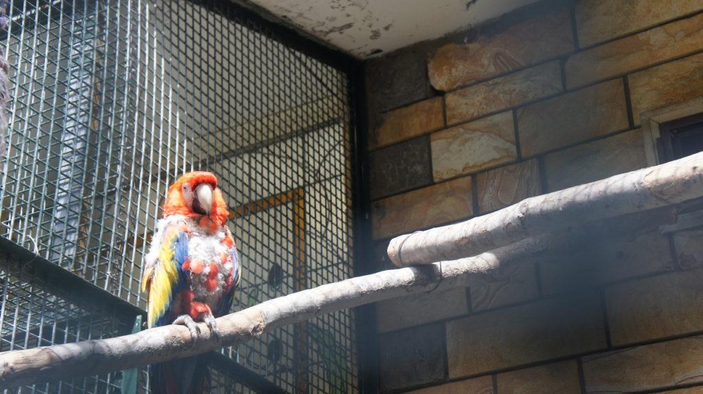Benekli Muhabbet Kuşu